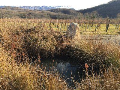 Kamen, vstop v Fedora vinograde