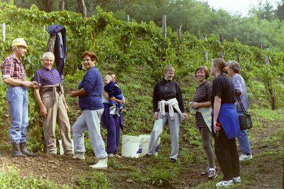 Trgatev 1993